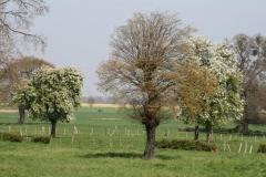 Im Baumgarten